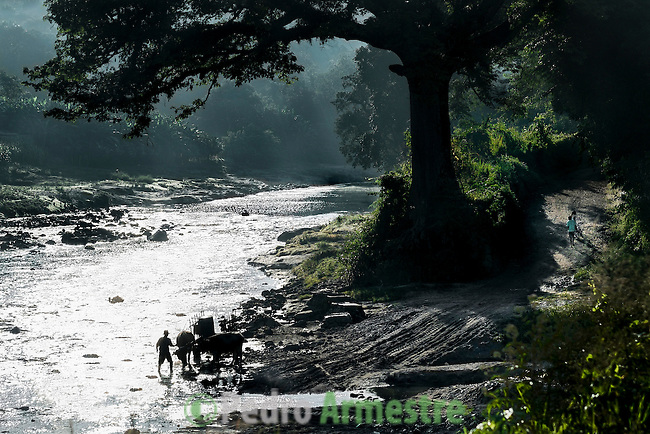November 10, 2014. &quot;Water it&acute;s the real thing&quot;<br /> A bullock cart is in the river Acelhuate (Nejapa, El Salvador) to take water. The river is contaminated. .The people of Nejapa in El Salvador, have no drinking water because the Coca -Cola company overexploited the aquifer in the area, the most important source of water in this Central American country. This means that the population has to walk for hours to get water from wells and rivers. The problem is that these rivers and wells are contaminated by discharges that makes Coca- Cola and other factories that are installed in the area. The problem can increase: Coca Cola company has expansion plans, something that communities and NGOs want to stop. To make a liter of Coca Cola are needed 2,4 liters of water.  &copy;Calamar2/ Pedro ARMESTRE