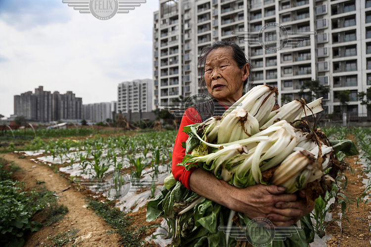 87 year old farmer Wang Mei grows food in a plot in front of a giant relocation housing project in the southwestern Chinese megapolis of Chengdu. Her neigbours were all moved from their farmland and resettled nearby in this purpose-built estate on the outskirt of the city. She, however, has not been given an apartment because she was a distant migrant without legal permit to live there. She bemoans this and said she wished the government would take her land and give her an apartment instead. The Chinese government plans to move 250 million rural residents into urban areas over the coming dozen years though it is unclear whether people want to move and where the money for this project will come from. Further urbanisation is meant to drive up consumption to counterbalance an export orientated economy and end subsistence farming but the drive to get people off the land is causing tens of thousands of protests each year. /Felix Features