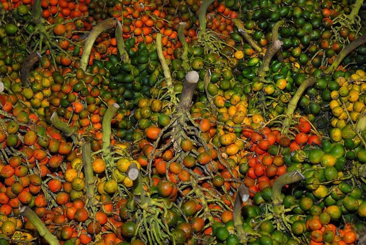 Atravessadores comercializam a pupunha em mais uma madrugada no Ver-o-Peso.<br /> O fruto, apreciado na região vem de diversos municípios do interior.<br /> Belém, Pará, Brasil.<br /> Foto Paulo Santos<br /> 30/03/2008<br /> <br /> palmeira de até 20 m ( Bactris gasipaes ), nativa da América Central à Amazônia, solitária ou cespitosa, estipe com anéis de espinhos, folhas verde-escuras, tb. armadas, com espinhos pretos, e frutos de polpa fibrosa, vermelho-amarelados, verde-amarelados ou ocres; pupunha-piranga, pupunha-verde-amarela, pupunheira, pupunheiro [Amplamente disseminada no Brasil pelo fruto saboroso e nutritivo, consumido após cozimento, e que, assado, fornece farinha, pela amêndoa, de que se extrai óleo, e pelo palmito comestível.].