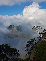 Trees frame an overlook of Kalalau Valley, its mountains looming through mist and clouds, Kaua'i.