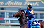 October 28, 2019 : Breeders' Cup Juvenile Turf entrant War Beast, trained by Doug F. O'Neill, exercises in preparation for the Breeders' Cup World Championships at Santa Anita Park in Arcadia, California on October 28, 2019. Scott Serio/Eclipse Sportswire/Breeders' Cup/CSM