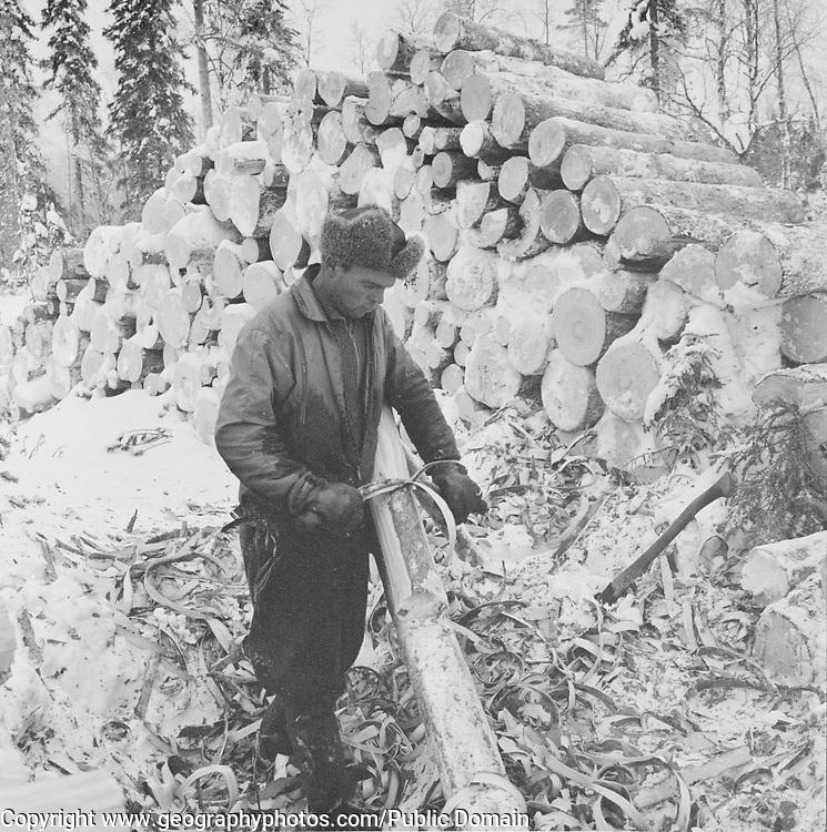 Male forestry worker peeling bark from tree trunk, Finland, 1959