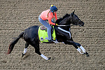 LOUISVILLE, KENTUCKY - MAY 02: Win Win Win, trained by Michael Trombetta, exercises in preparation for the Kentucky Derby at Churchill Downs in Louisville, Kentucky on May 2, 2019. John Voorhees/Eclipse Sportswire/CSM