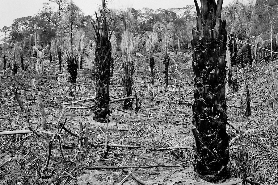 Burnt out jungle, due to the farms and cow breeding, seen at the Beni-Rondonia frontier, Brazil, 8 August 2002. Amazonia is the world's largest dense tropical forest area. Since the 16th century the original indigenous people have been virtually pushed away or exterminated. The primal ancient unity between tribes and the jungle ambient has changed into a fight between the urban based civilization and the jungle enviroment. Although new generations of white and mestizo settlers have not become adapted to the wild tropical climate and rough conditions, they keep moving deeper into the virgin forest. The technological expansion causes that Amazonia is changing rapidly.