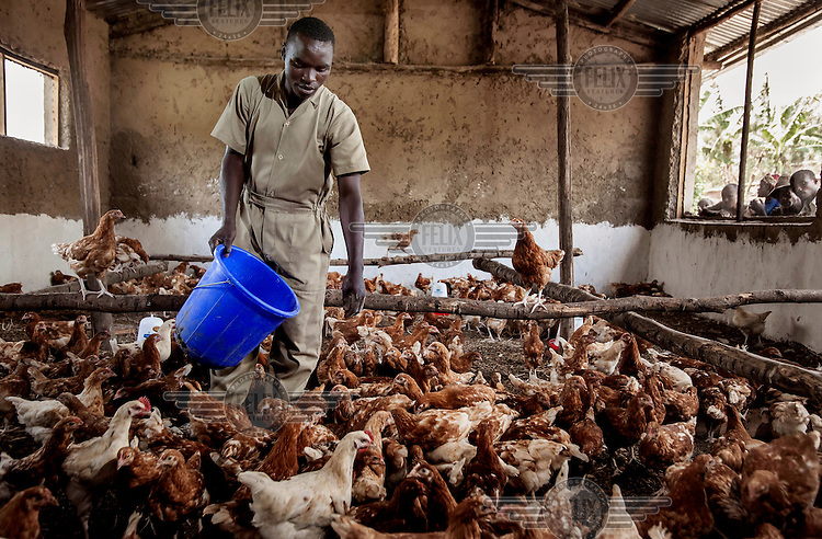 A man feeds chickens donated by an aid agency to a family small holding.