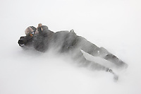 Agardh-bukta; Arctic; Arktis; ENGLISH; Europa; Folk; GENDER; GEOGRAFI; LAND/BYER/STEDER; Male; Man; Mann; Men; NORSK; Norge; Norway; People; Skandinavia; Slettemappe; Snow; Snow Blizzard; Snø; Spitsbergen; Svalbard; Uvær; Vind; VÆR; WEATHER; WWE