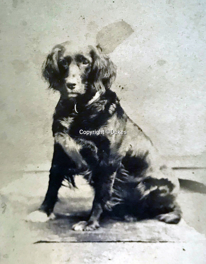 BNPS.co.uk (01202 558833)<br /> Pic:  Dukes/BNPS<br /> <br /> Major General Reginald Sartorius loyal dog Bell- who accompanied him on the campaign, and became quite famous on their return to Victorian Britain.<br /> <br /> The extraordinary story of two hero brothers who both received the Victoria Cross can be told after their bravery medals emerged for sale.<br /> <br /> Major General Reginald Sartorius was awarded the highest honour for gallantry after he rescued a wounded comrade under heavy fire during an African campaign in 1874.<br /> <br /> Major General Euston Sartorius followed in his footsteps five years later, earning a VC for leading his men in a daring offensive on a heavily guarded hill in Afghanistan, overcoming seemingly insurmountable odds. His small force engaged in a sword fight with the 'fanatical' enemy atop the hill, slaying seven of them.<br /> <br /> They are one of just four sets of brothers who have received VCs since the award was introduced by Queen Victoria in 1856 to honour acts of bravery during the Crimean War.<br /> <br /> The miniatures of their VCs are being sold by their descendants with auction house Dukes, of Dorchester, Dorset, who expect them to fetch £20,000.