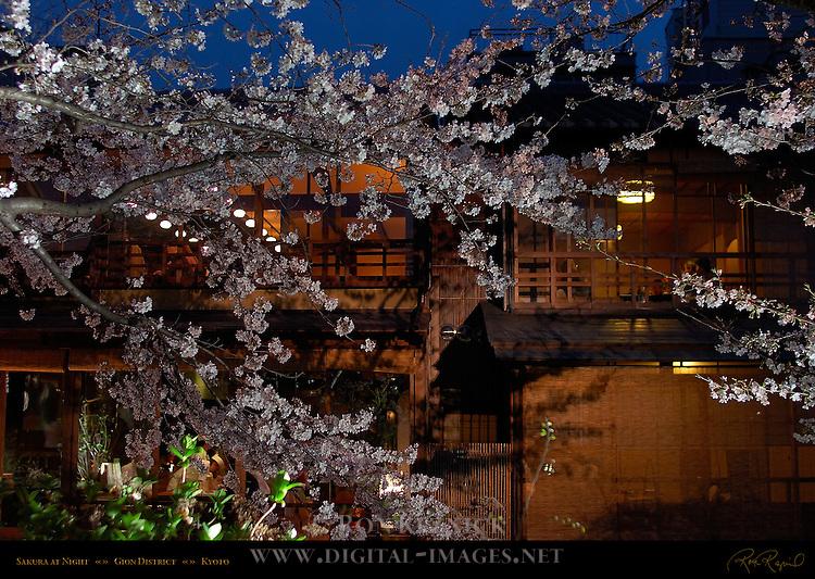 Sakura at Night and Ochaya Gion District Kyoto Japan