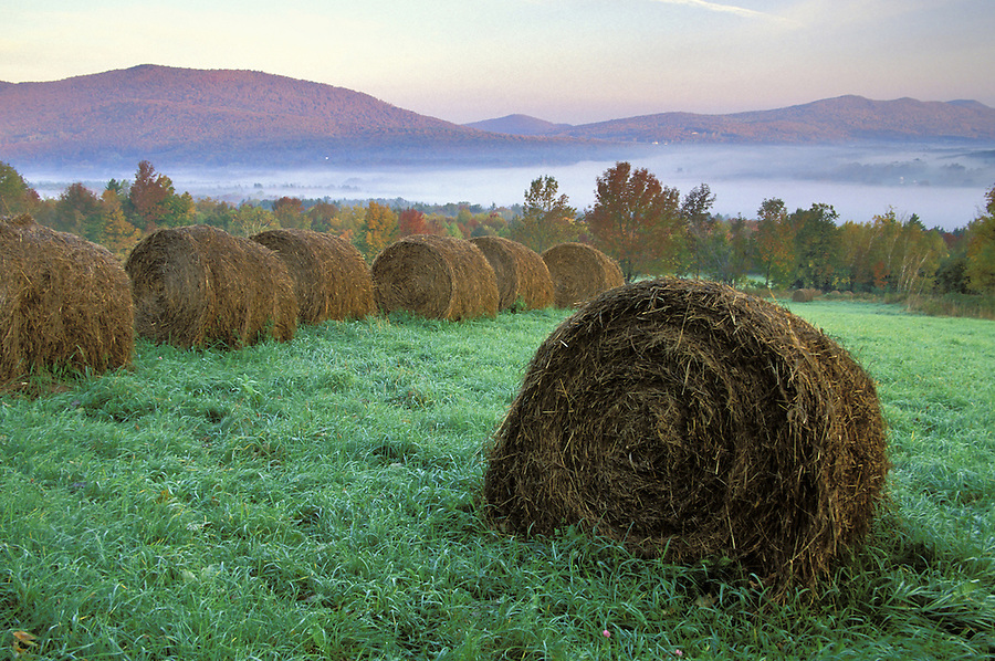 Field with rolled bales of hay at sunrise, Danby Four Corners, Rutland County, Vermont