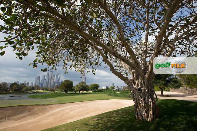 Interesting trees beside the 5th green ahead of the 2016 Omega Dubai Desert Classic played at the Emirates Golf Club, Dubai, United Arab Emirates.  30/01/2016. Picture: Golffile | David Lloyd<br /> <br /> All photos usage must carry mandatory copyright credit (&copy; Golffile | David Lloyd)