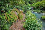 Vashon-Maury Island, WA: Pathway through a summer perennial garden and salt water pool.