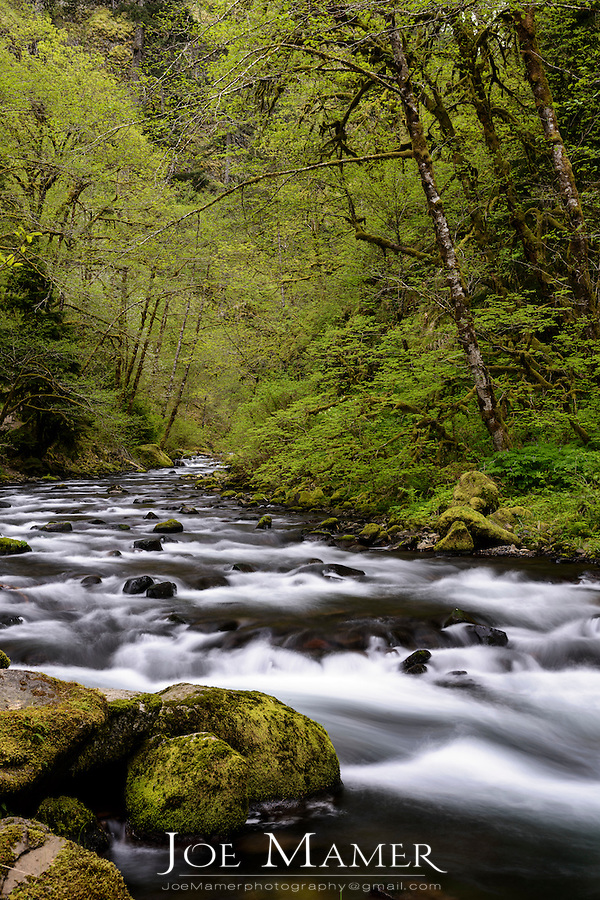 Tanner Creek in the Columbia River Gorge.