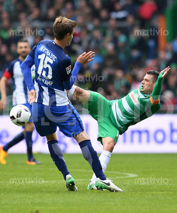 FUSSBALL     1. BUNDESLIGA      31. SPIELTAG    SAISON 2016/2017  SV Werder Bremen - Hertha BSC Berlin                          29.04.2017 Zlatko Junuzovic (re, SV Werder Bremen) gegen Sebastian Langkamp (li, Hertha BSC Berlin)
