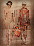 An anatomy chart with two figures holding a heart