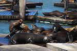 CA sea lions at Pier 39