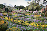 Wide view of Chartres Window Garden in Filoli wall garden in spring