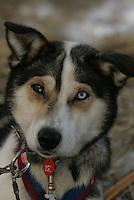 Clint Warnke's dog 'Chili' at the Nikolai checkpoint Wednesday
