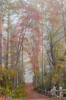 Footpath to Hooker Falls and autumn colors in fog, Dupont State Forest, near Brevard, North Carolina