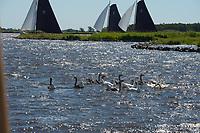 ZEILSPORT: GROU: Pikmeer, 01-07-2018, Skûtsjesilen trainingswedstrijd, ©foto Martin de Jong