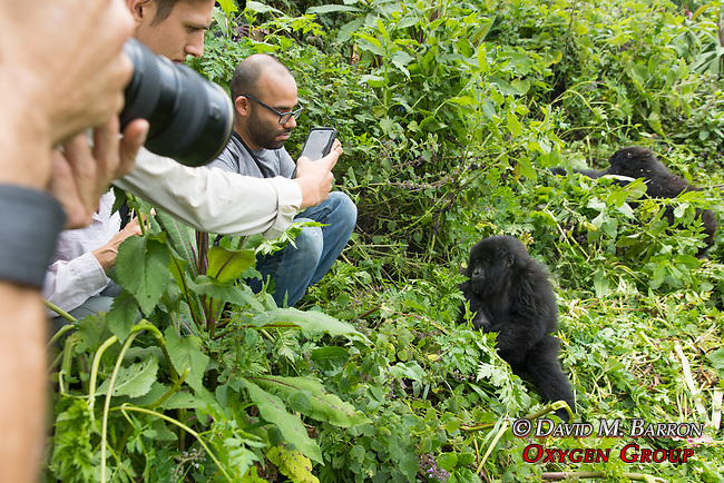 Viewing Mountain Gorillas