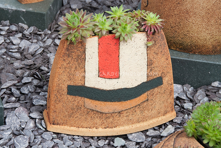 Sempervivums and sedums succulent plants in interesting container planter by Axios Gallery