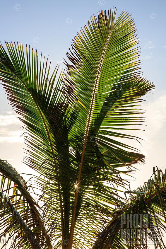 The sun shines through coconut palm tree fronds at Lydgate Beach Park, Wailua, Kaua'i.