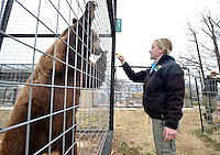 NWA Democrat-Gazette/BEN GOFF -- 03/09/15 Katie Anderson, staff biologist at Turpentine Creek Wildlife Refuge, offers a piece of fruit to Bam Bam, a grizzly bear,  at the refuge near Eureka Springs on Monday Mar. 9, 2015. Anderson, an avid runner, has pledged to run the upcoming Victorian Classic 10K Run in Eureka Springs wearing a tiger costume if supporters donate at least $5,000 to help build larger habitat spaces at the refuge so the tigers can enjoy running themselves.