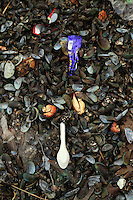 Trash mixed with mussel shells in the port area of Jakarta.<br />