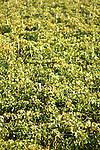The Catena Zapata vineyard in Mendoza, Argentina.