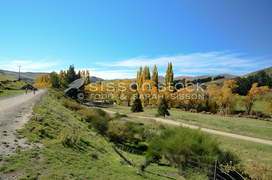 Yellow willow and poplar trees and a vivid blue sky in the upper taieri gorge as seen from the central Otago rail trail between Tiroiti and Hyde.  A gravel dirt road is visible.