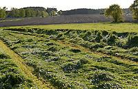 Deutschland, Plauerhagen, Grasschnitt fuer Heu Herstellung