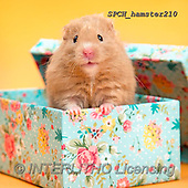 Xavier, ANIMALS, REALISTISCHE TIERE, ANIMALES REALISTICOS, photos+++++,SPCHHAMSTER210,#A#, EVERYDAY ,funny
