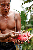 BELIZE, Punta Gorda, Village of San Pedro Colombia, portrait of Cacao farmer Eladio Pop at the Agouti Cacao Farm, holding a Haleconia flower