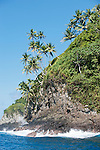 Cocos Island, Costa Rica; palm trees lean out over the rocky cliffs as waves crash below