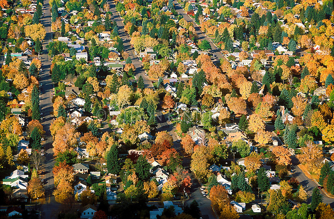 The Missoula, Montana valley floor in full fall color in a university area neighborhood