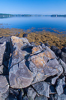 Granite and Sea Weed, Sheep Island, Castine, Maine, US