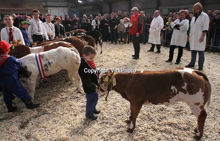 Foto: VidiPhoto..RHENEN - Bijna 100 stuks vee in allerlei soorten en maten uit het hele land, gingen zaterdag in Rhenen met elkaar de strijd aan om de mooiste en beste dikbil van Nederland. Het kampioenschap om het beste vleesvee van Nederland werd zaterdag voor de 76e keer gehouden. Volgens de organisatie neemt de kwaliteit van de dikbillen ieder jaar toe en stijgt het aantal inzendingen. De jeugd kon een prijs winnen voor het mooiste 'voorbrengen' van een kalf.