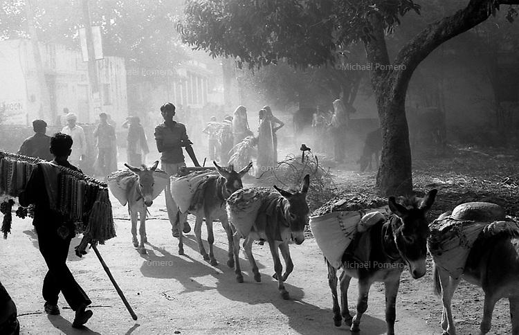 11.2008  Pushkar (Rajasthan)<br /> <br /> Group of donkeys carrying stones during the pilgrimage of kartik purnima.<br /> <br /> Groupe d'ânes transportant des pierres pendant le pèlerinage de kartik purnima.
