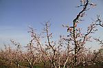 Israel, Upper Galilee, Orchards by Moshav Yuval