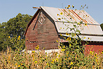 A cross-k-inside diamond brand embellishes a faded red barn by a corn field in central Kansas.