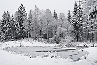 Partially frozen pond with forest landscape covered in snow.