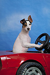 Jack Russell Terrier Shopping cart has 3 Tabs:<br />