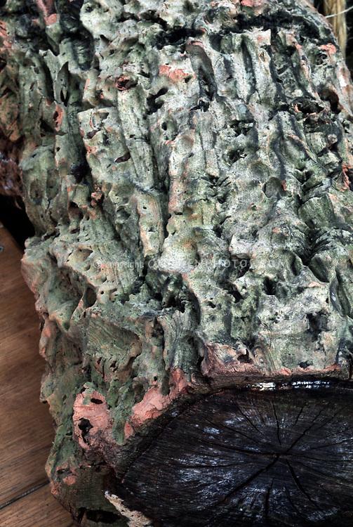 Furrowed cork oak bark   Plant & Flower Stock Photography ...