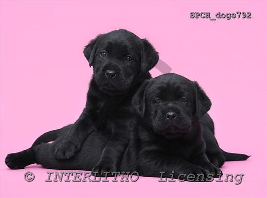 Xavier, ANIMALS, dogs, photos, SPCHdogs792,#A#