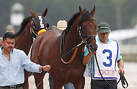 September 3, 2012. Teeth of the Dog heads to the paddock before the grade III Smarty Jones Stakes at Parx Racing. The Michael Matz-trained colt finished third but was vanned off after the race. (Joan Fairman Kanes/Eclipse Sportswire)