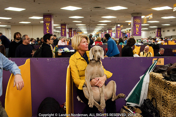 NEW YORK -  FEB 16: Jennifer Martin and her Weimaraner named Sizzle rest after competing on the final day of the annual 134th Westminster Kennel Club Dog Show at Madison Square Garden in New York, February 16, 2010. (Photo by Landon Nordeman)