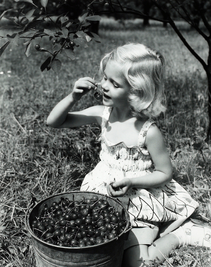 Young girl eating cherries from gathering bucket in orchard. 1950's.<br />