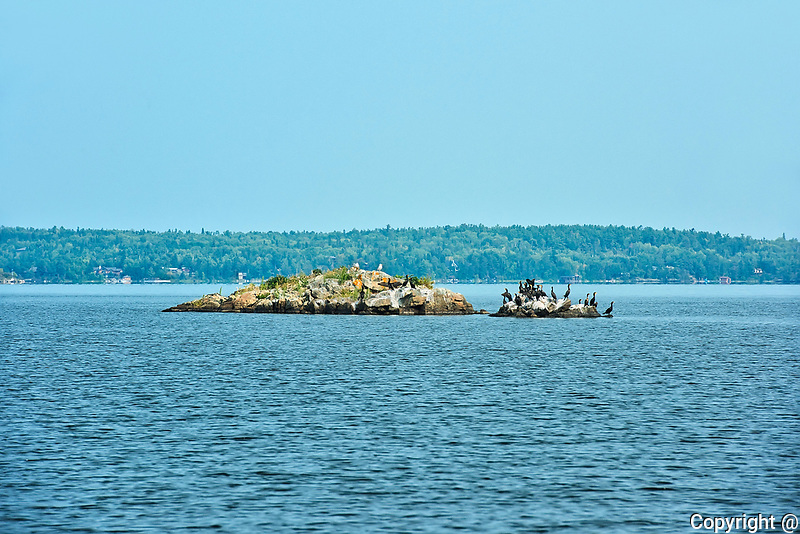 Black crested cormorants on Island in Lake of the Woods<br />
