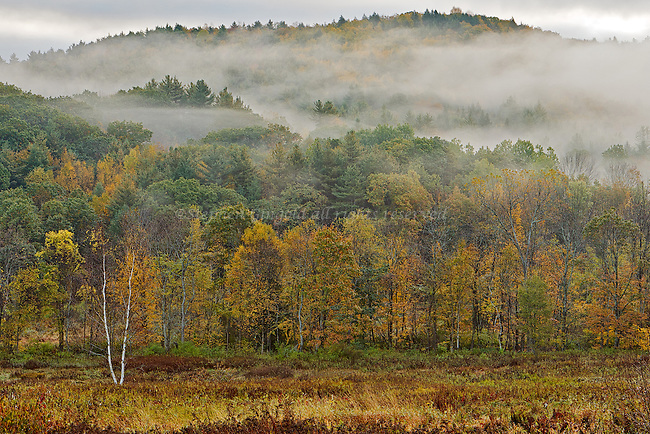 Lots of foggy atmosphere over the Poland Brook Wildlife Management Area in Conway, Massachusetts.