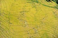 URUGUAY Bella Uniòn , 2100 Hektar Farm der Brueder Karol und Aleco Pinczak, Nachkommen polnischer Einwanderer, Reisfelder , Erntertrag 10 Tonnen pro Hektar, Reisfelder wurden durch Wasser vom Fluss Uruguay bewaessert / <br /> URUGUAY Bella Union, 2100 hectares farm, paddy field, yield 10 tons per hectare, rice fields irrigated with water from river Uruguay